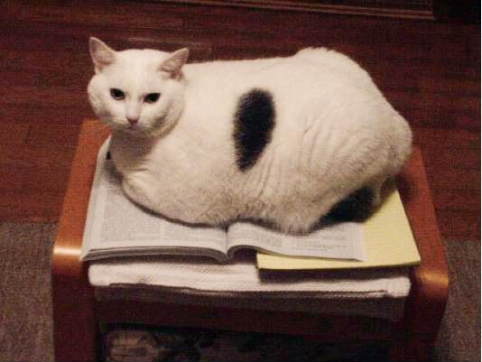 cat lighter
